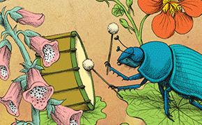 Insectenband Emma Wilson, illustrator