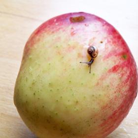 Kun je de schil eten groente fruit biologisch of niet Vegetarisch Weekmenu