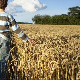 Wat is volkoren graanproducten meel bloem moutmeel rogge tarwe Vegetarisch Weekmenu