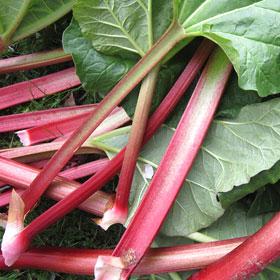 Rabarber koken recept gezond giftig seizoen zonder suiker Vegetarisch Weekmenu