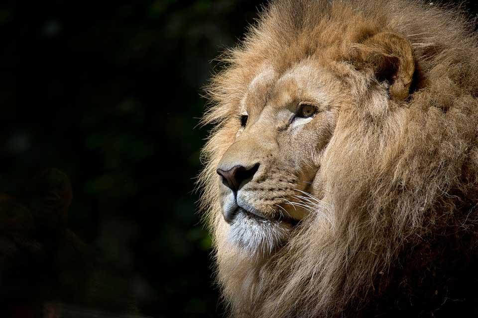 Hoe diervriendelijk is een dierentuin leeuw Vegetarisch Weekmenu