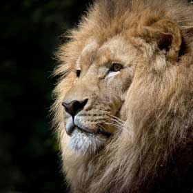Zoo dierenpark dierentuin dierenmishandeling leeuwen Vegetarisch Weekmenu