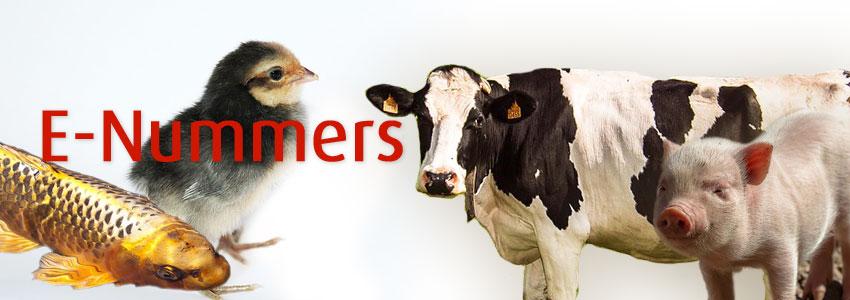 Welke e-nummers dode dieren Vegetarisch Weekmenu